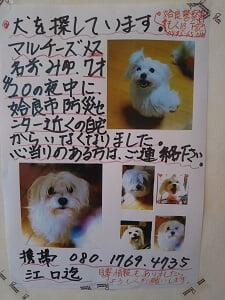 ミスド姶良の迷い犬お知らせの写真